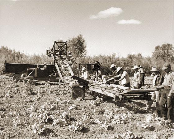 Historic Field Work Photo